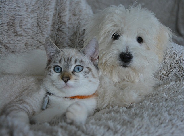 5 Things to Know for National Pet ID Week