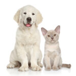 Cat and dog together on white background. Animal themes